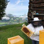 Fleissige_Bienen