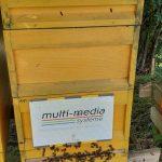bienenstock-multi-media-systeme-ag