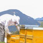 Durchsicht unseres Bienenstocks im Frühjahr durch einen Imker von Beefuture