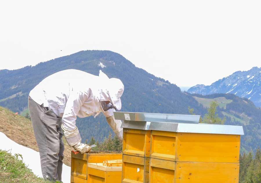 Beefuture Imker bei der Durchsicht der Bienenstöcke